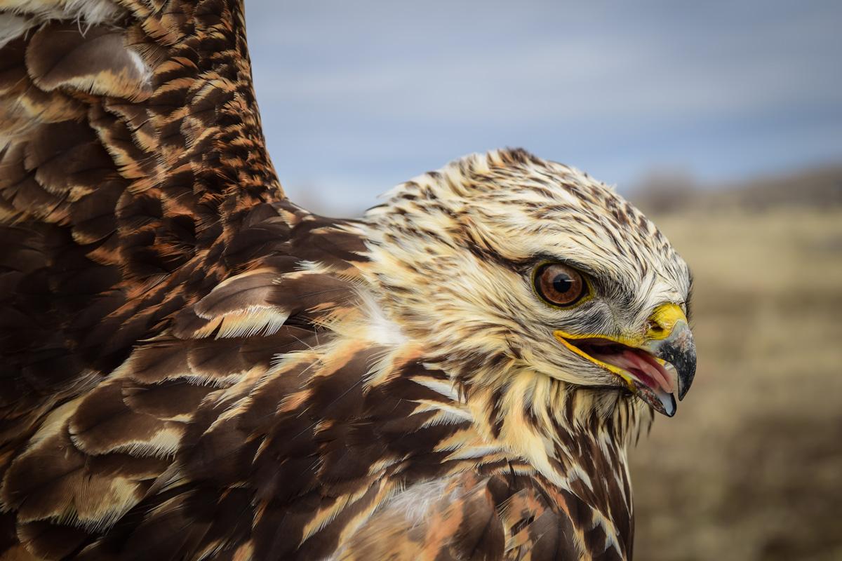 8 states sue Interior for rollbacks on migratory bird