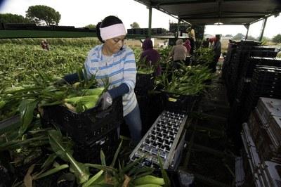 The women confronting California's farm conditions
