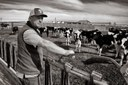 Contamination from an Air Force base devastates a New Mexico dairy