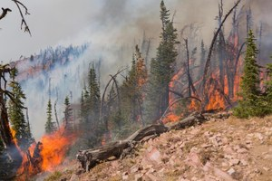 Blame for wildfires gets pinned on 'environmental extremists'