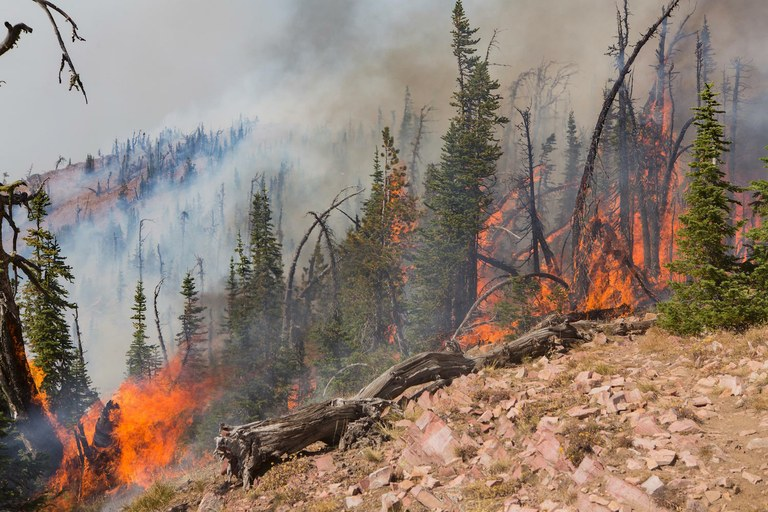 Blame For Wildfires Gets Pinned On Environmental Extremists High