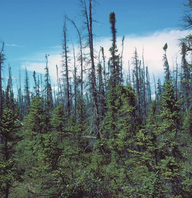 More Alaskan forests are burning, not just due to climate change
