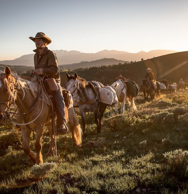 Mustangs deserve a better film than 'Unbranded'