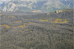 New hope for beetle-killed landscapes