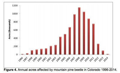 co-pine-beetles-jpg
