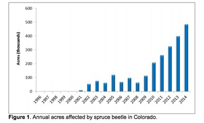 co-spruce-beetles-jpg