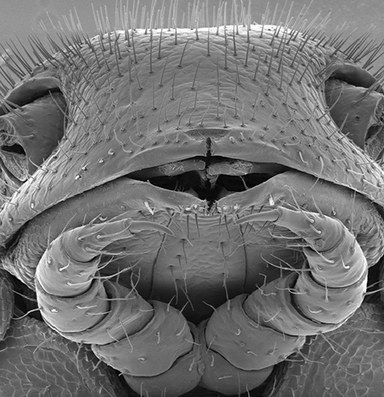 In California caves, a millipede mystery