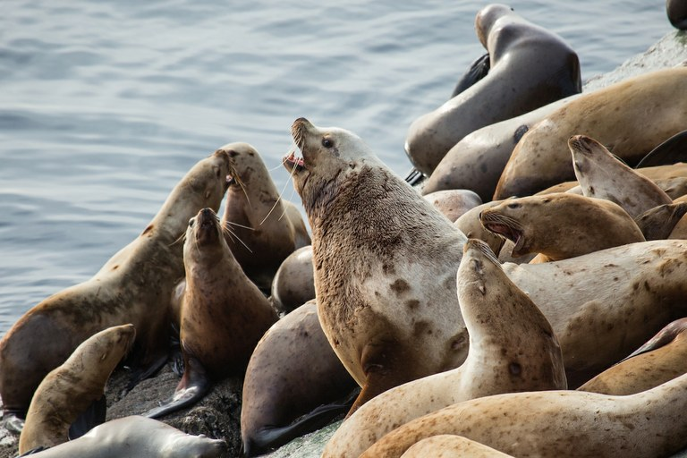 Marine mammals and turtles rebound after endangered species protections