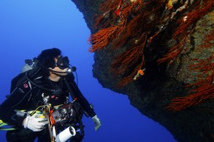 There's still time to comment on marine monument review