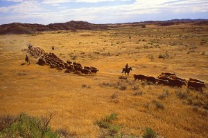 Will public-lands ranchers pay more for grazing?