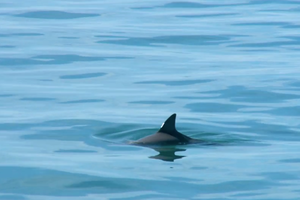 The fight to save vaquitas from extinction