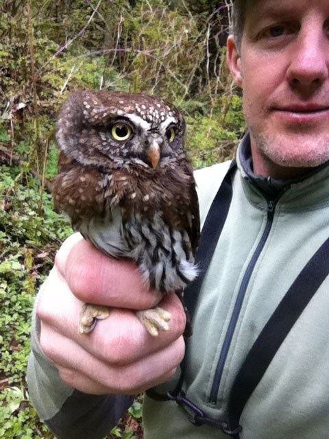 John Deshler, self portrait with an adult pygmy owl.