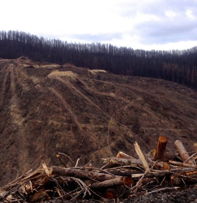 Logging isn't the solution to our wildfire problems