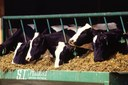 Factory farms can lead to industrial-sized problems