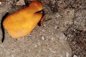 'Organic' litter is not copacetic