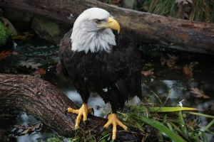 The Endangered Species Act itself could go extinct
