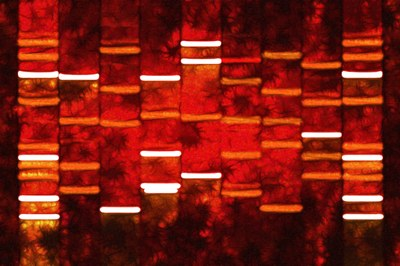 Tribal members bear the cost of ending blood quantum certificates