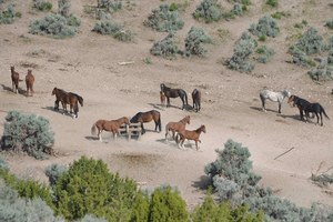 Wild horse extremists obscure real-world solutions
