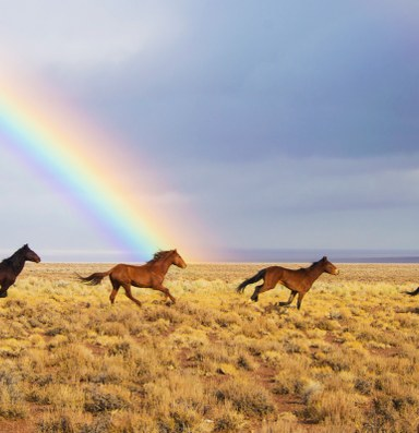Wild horses aren't overrunning the West