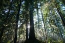 Oregon keeps the Elliott State Forest public