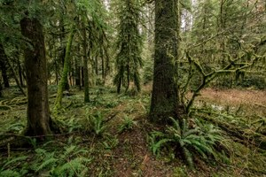 Oregon may sell a state forest that's no longer profitable