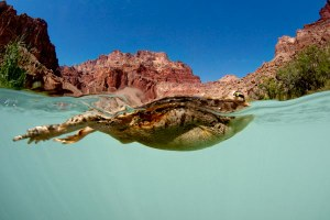 Peter McBride on photographing the contentious Colorado River