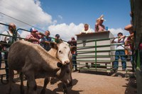 'Flash drought' threatens crops and cattle