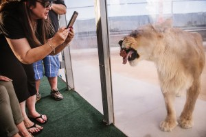 African cats find a home in the Nevada desert