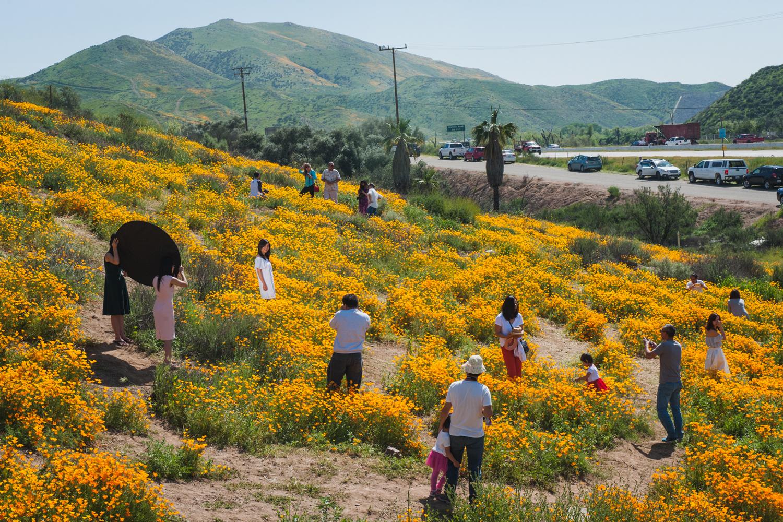 Californias Desert Wildflowers Burst Into Bright Super Bloom