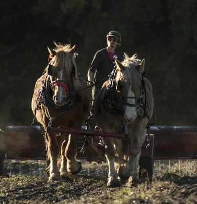 The allure of horse-powered farms