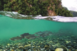 Plunging oil prices are saving Alaskan ecosystems — for now