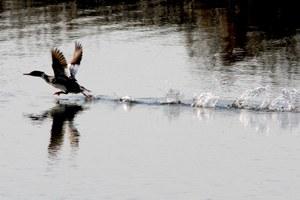 California oil spill contaminates restored wetland
