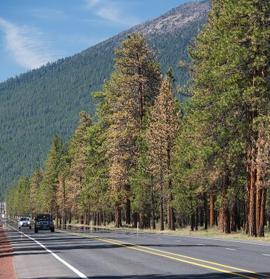 Dead pines drive new herbicide rules in Oregon