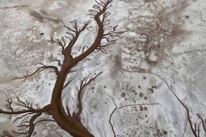 A progress report on the Colorado River pulse