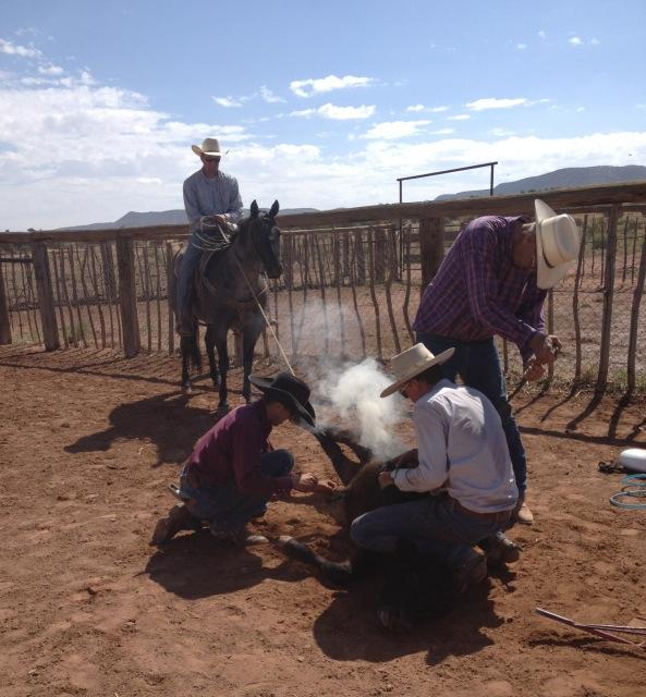 Branding 101 - Branding Calves on a Working Montana Ranch ...