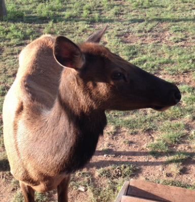 Ranch Diaries: How to coexist with wild animals