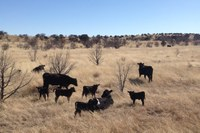Ranch Diaries: Should we name the animals we raise to eat?