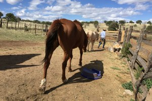 Ranch Diaries: Is ranching a form of conservation?