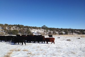Ranch Diaries: How to apply holistic livestock management to life goals