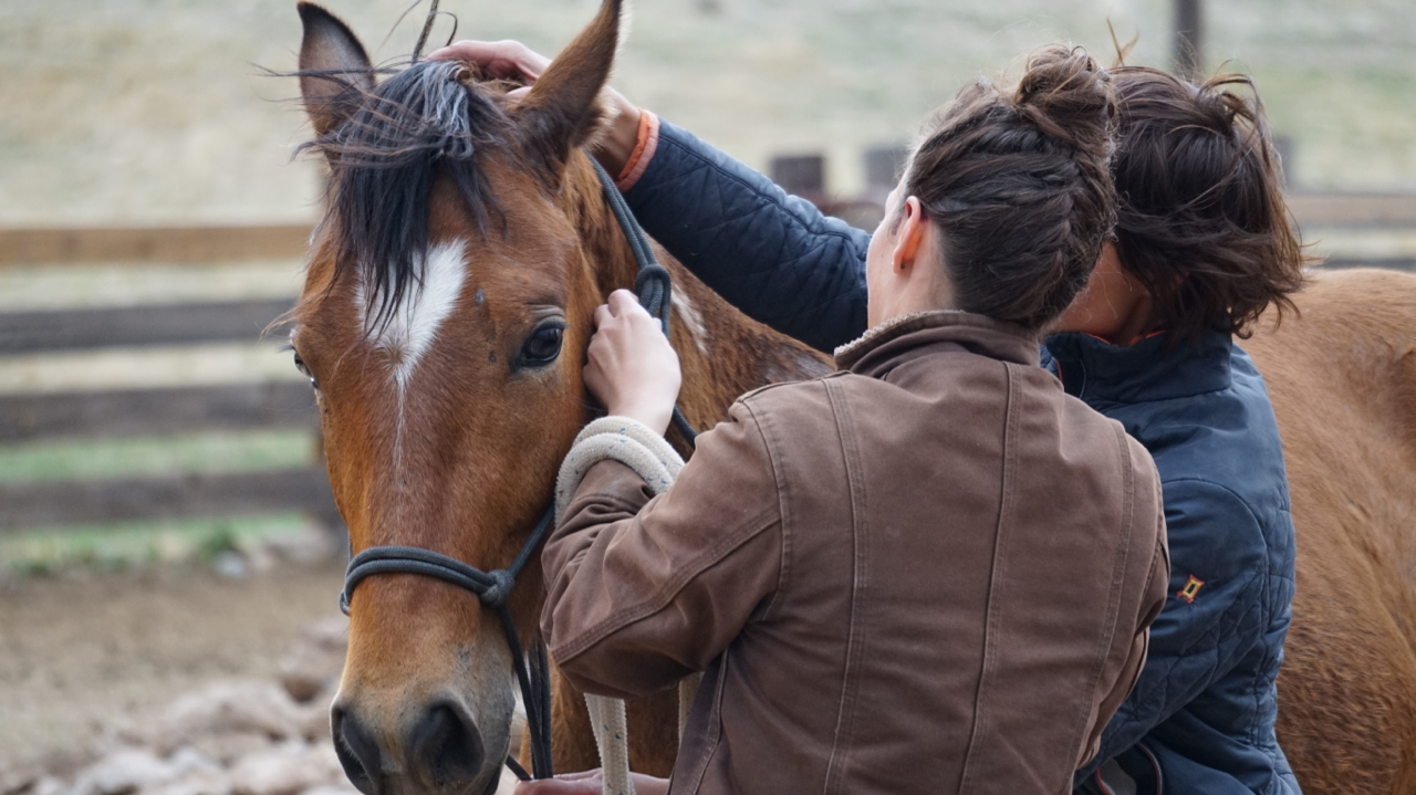 Ranch Diaries: Turning a mustang into a willing partner — High