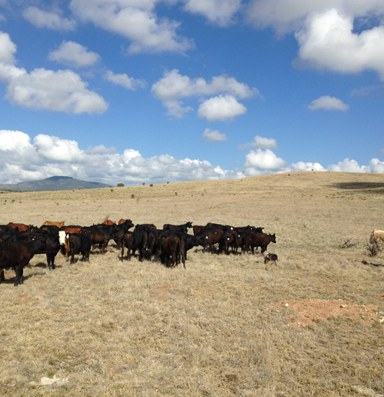 Ranch Diaries: On returning home from the city