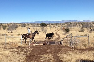 Ranch Diaries: Purchasing cattle, writing the business plan