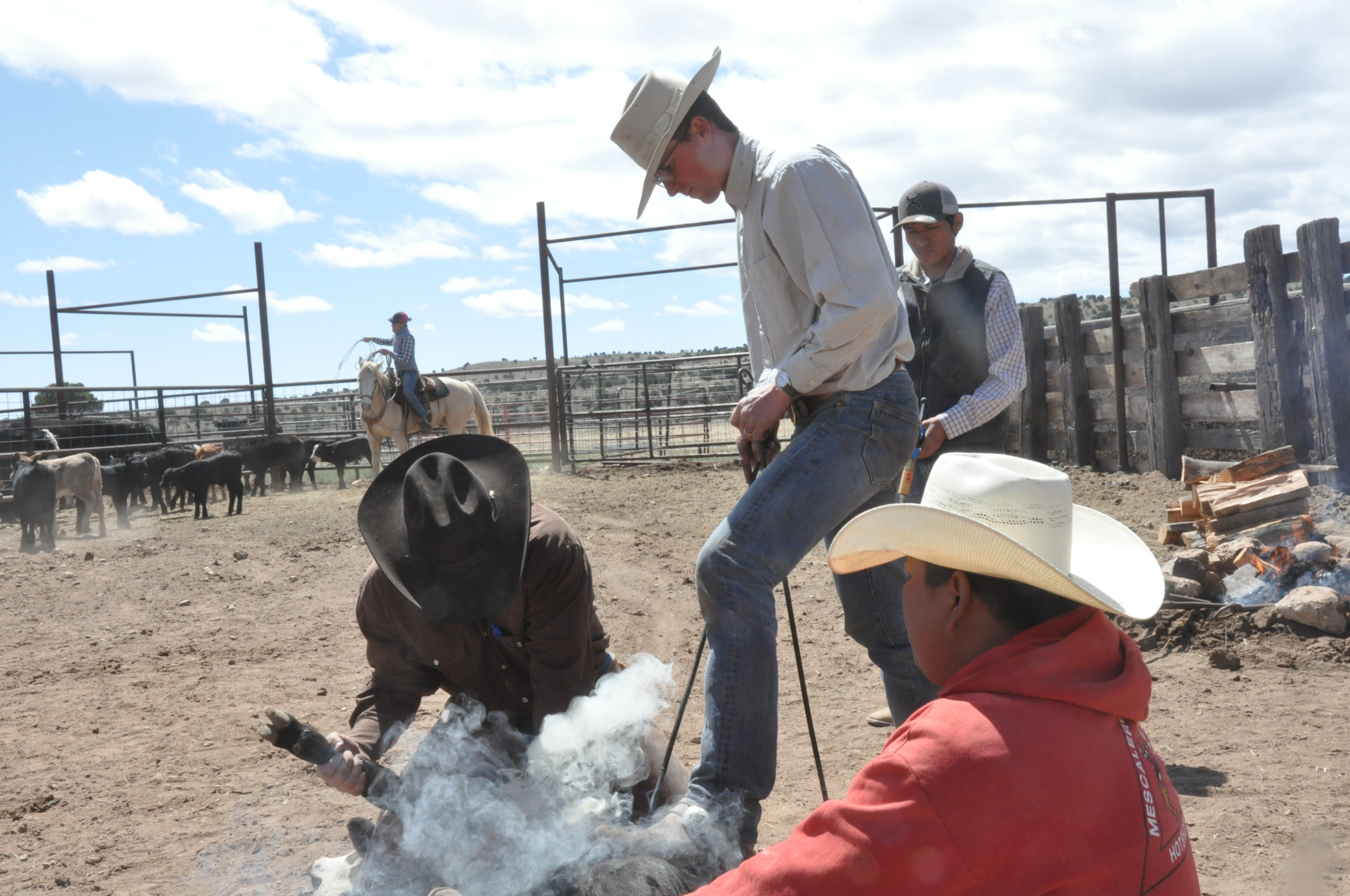 As technology improves, should ranchers keep branding ...