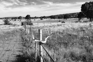 Ranch Diaries: The era of the landless agrarian