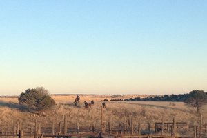 Ranch Diaries: Year in review at Triangle P