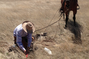 Ranch Diaries: Early spring grass brings unexpected challenges