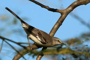 Rants from the Hill: Fall brings a new bird to the neighborhood