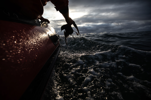 Scientists decode environmental impacts from Bering Sea bird feathers