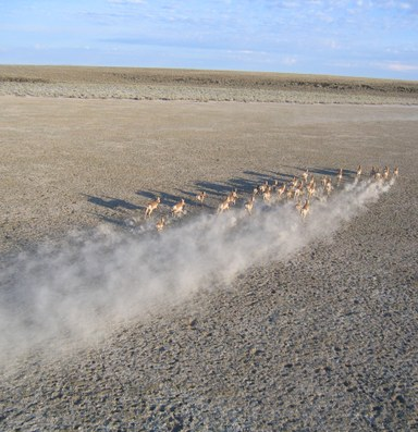 Scientists document mega Oregon-Nevada pronghorn migration