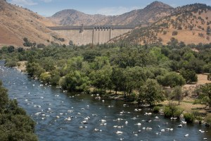 'Deadbeat dams' and their impact on cold-water ecosystems